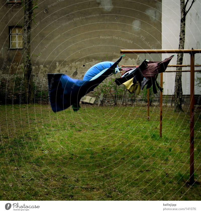 the answer my friend is blowing in the wind Baum blau Haus Leben Wiese Wand Bewegung Wind Seil Lifestyle frisch Rasen Sauberkeit rein Häusliches Leben Sturm