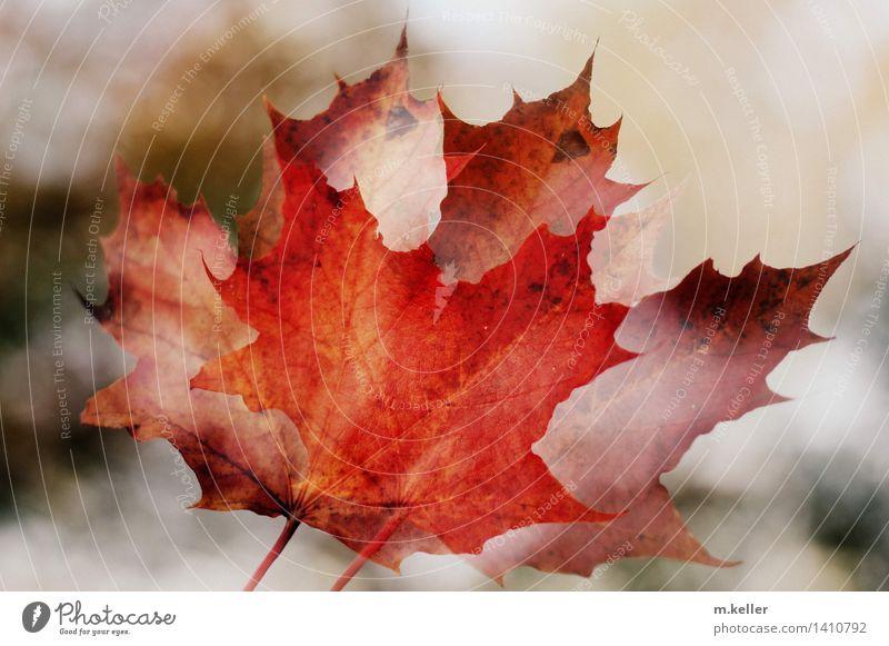 autumn Natur Pflanze Baum Erholung Blatt Umwelt Herbst Senior Stimmung einzigartig Hoffnung Euphorie Vorfreude Interesse Begeisterung erleben