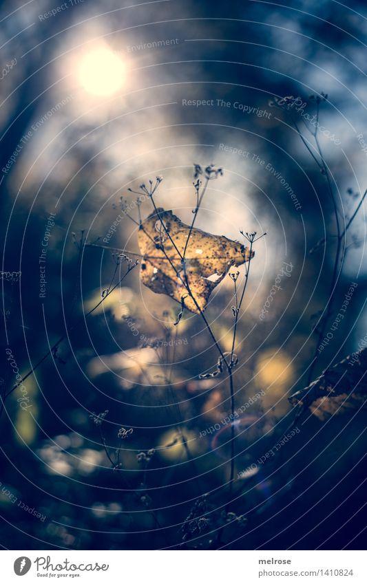 Herbstblues Stil Design Natur Sonnenlicht schlechtes Wetter Pflanze Sträucher Blatt Wildpflanze Zweige u. Äste Märchenwald Blattadern Gräserblüte Wald