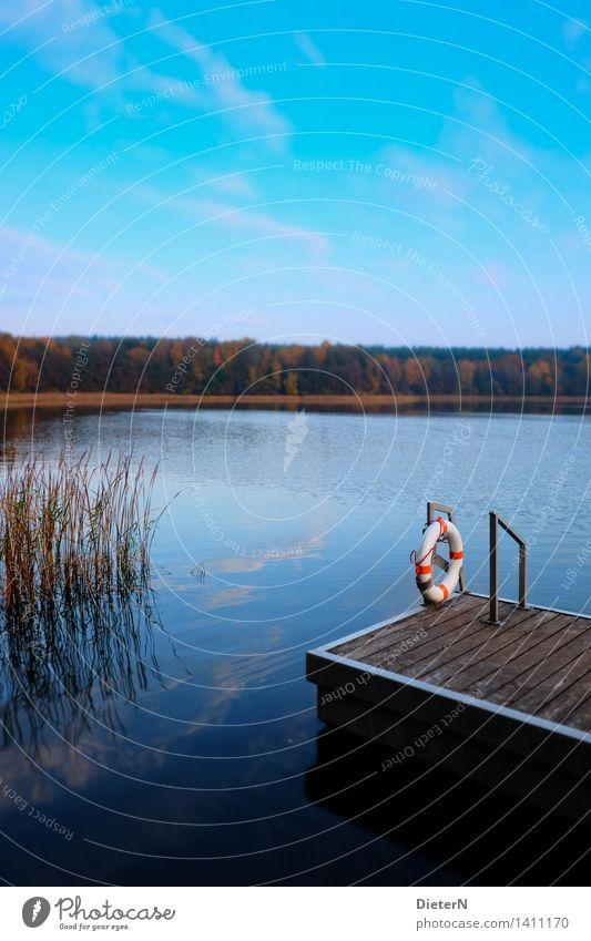 Sicherheit Natur Landschaft Wasser Himmel Wolken Herbst Gras Seeufer blau schwarz weiß Rettungsring Steg Schilfrohr Küste Farbfoto mehrfarbig Außenaufnahme