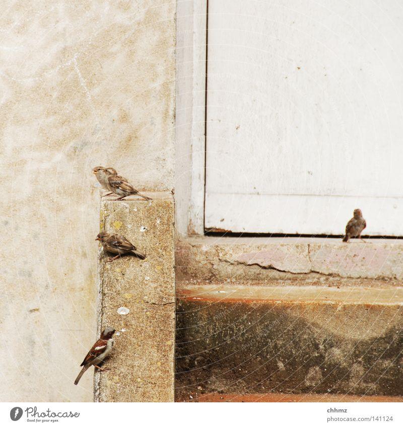 Tummelplatz Stadt Erholung Leben Mauer lustig Vogel Tür sitzen Treppe warten mehrere viele Neugier Herde Spatz Federvieh
