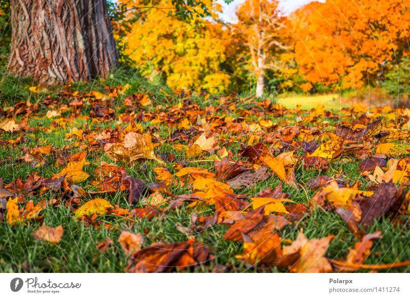 Herbstlaub unter einem Baum im Fall schön Sonne Umwelt Natur Landschaft Pflanze Blatt Park Wiese Wald hell natürlich braun gelb gold grün rot Farbe fallen