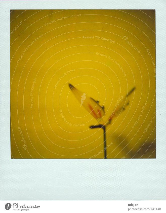 Zitronenflatter Polaroid analog 600 Bilderrahmen weiß gelb Schmetterling Insekt Kunst künstlich gestellt Kunststoff fliegen frei Freiheit Stock Farbe Flügel