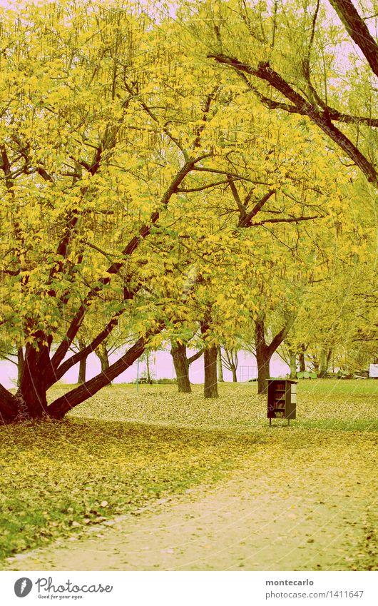 büchertausch Umwelt Natur Landschaft Pflanze Herbst Wetter Baum Gras Blatt Grünpflanze Wildpflanze Park Wiese Seeufer Papier Buch Bücherregal Holz Kunststoff