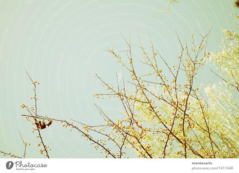 herbstfrische Umwelt Natur Pflanze Luft Himmel Wolkenloser Himmel Herbst Klima Schönes Wetter Baum Blatt Blüte Grünpflanze Wildpflanze dünn authentisch hoch