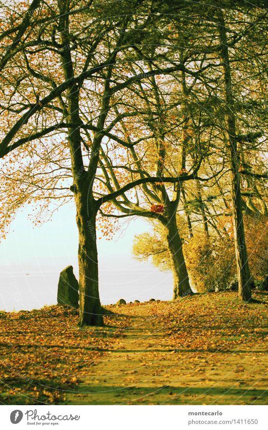 der weg... Umwelt Natur Landschaft Urelemente Erde Luft Wasser Himmel Wolkenloser Himmel Horizont Sonne Sonnenlicht Herbst Klima Schönes Wetter Pflanze Baum