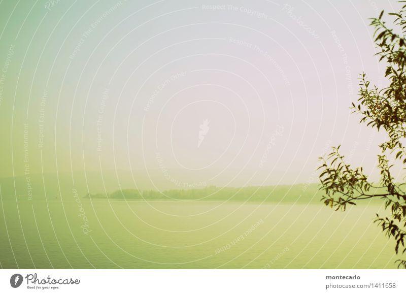 seezunge Umwelt Natur Landschaft Pflanze Urelemente Luft Wasser Herbst Klima Schönes Wetter Baum Blatt Seeufer Bodensee Landzunge authentisch Ferne einzigartig