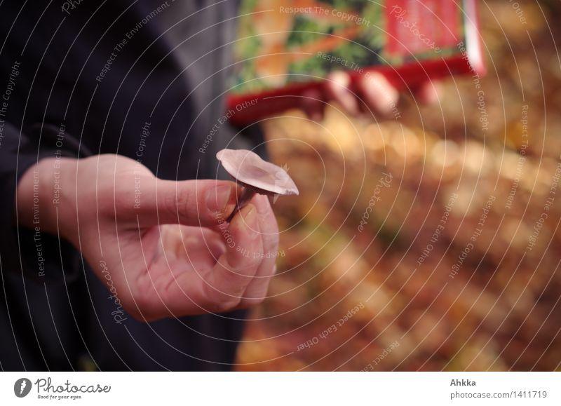 Pilzbestimmung Mensch Hand Wald Umwelt Herbst lernen beobachten Idee Neugier Suche Vertrauen Leidenschaft Konzentration Kontrolle Wissen
