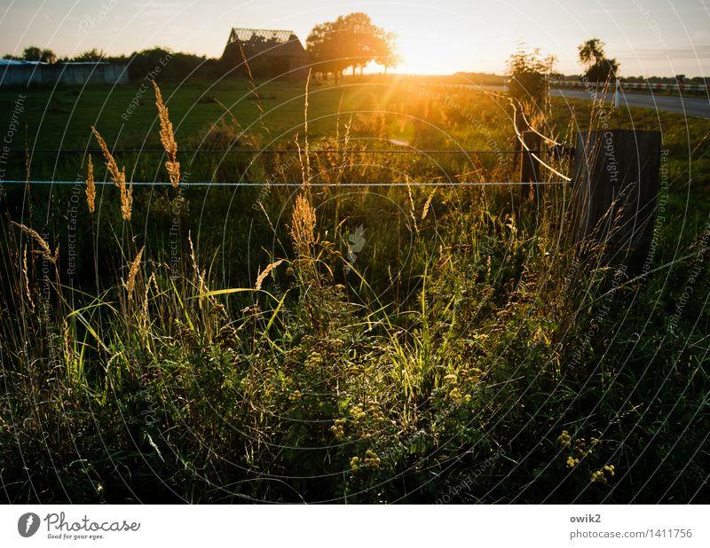Lichtdurchlässig Himmel Natur Pflanze Baum Landschaft ruhig Ferne Umwelt Gefühle Wiese Gras hell Horizont glänzend leuchten Idylle