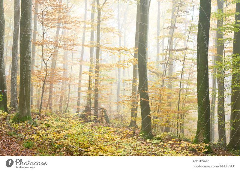 Autumn Leaves Natur grün Baum Blatt Wald gelb Herbst Nebel Sträucher Baumstamm Herbstlaub Herbstwald Nebelwald