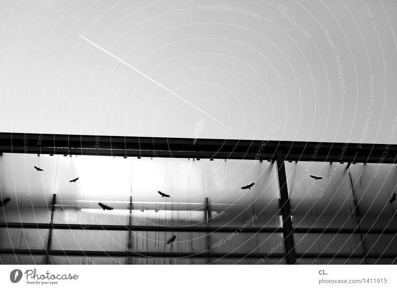 flugbewegungen Himmel fliegen Vogel Luftverkehr Flugzeug Schönes Wetter Wolkenloser Himmel