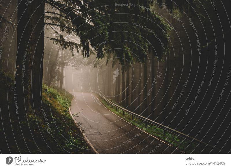 Trüb Natur Pflanze Herbst schlechtes Wetter Baum Gras Sträucher Moos Wald Hügel Straße Leitplanke bedrohlich dunkel Unendlichkeit Einsamkeit geschwungen