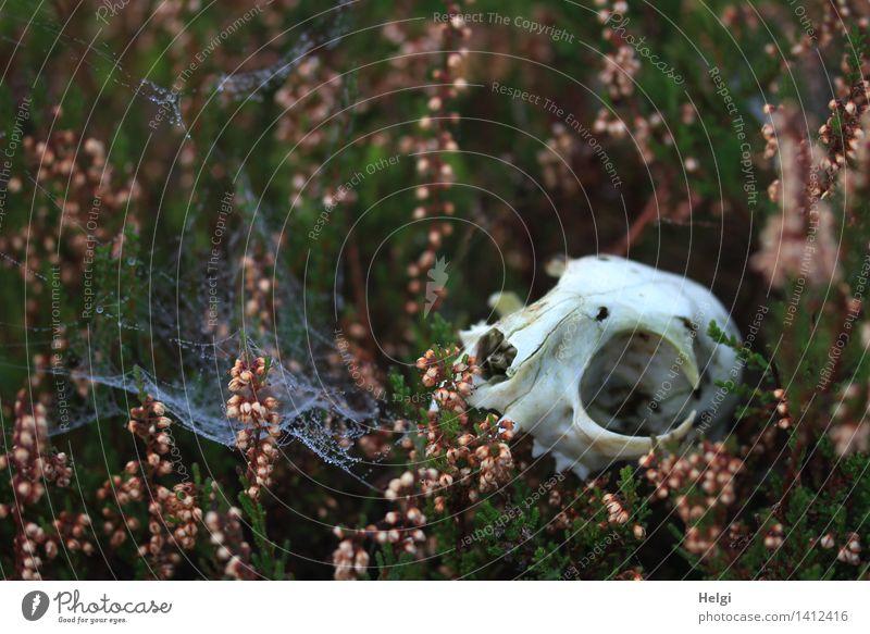Helgiland II | makaber... Natur Pflanze grün weiß Tier dunkel Umwelt Traurigkeit Herbst natürlich Tod grau außergewöhnlich Stimmung rosa liegen
