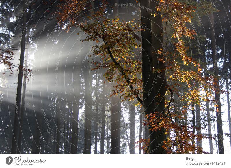 Helgiland II | Spot an... Natur Pflanze schön weiß Baum Landschaft Blatt ruhig Wald Umwelt gelb Leben Herbst natürlich grau außergewöhnlich