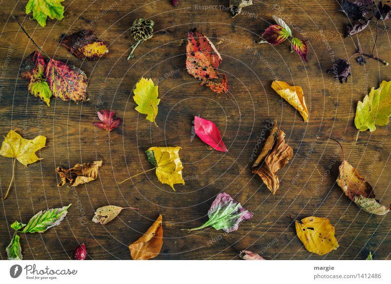 Der Klassiker- bunter Herbst Umwelt Natur Pflanze Tier Baum Blatt mehrfarbig gelb grün rot Eichenblatt Sammlung viele Verschiedenheit dehydrieren Herbstlaub