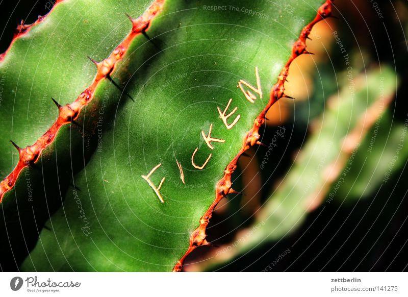 Ficken Kaktus Stachel grün Grünpflanze Zimmerpflanze Pflanze Sauerstoff atmen Photosynthese Fortpflanzung Sex Narrenhände Schriftzeichen Typographie Information