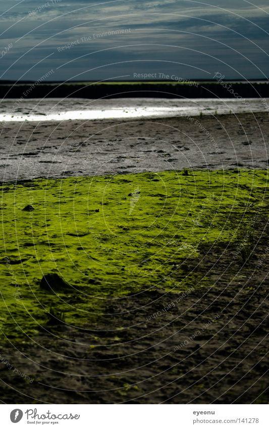 Im Watt Wattenmeer Nordsee Dithmarschen Küste Moos grün Himmel See Schlamm Meer