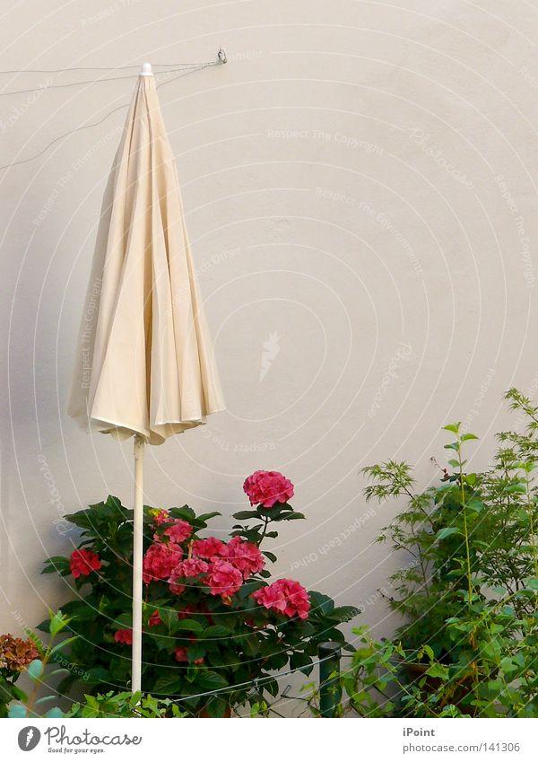 HinterHof - Oase schön grün weiß Sommer rot Blume ruhig Blüte grau natürlich Stimmung rosa Zusammensein authentisch frisch einfach