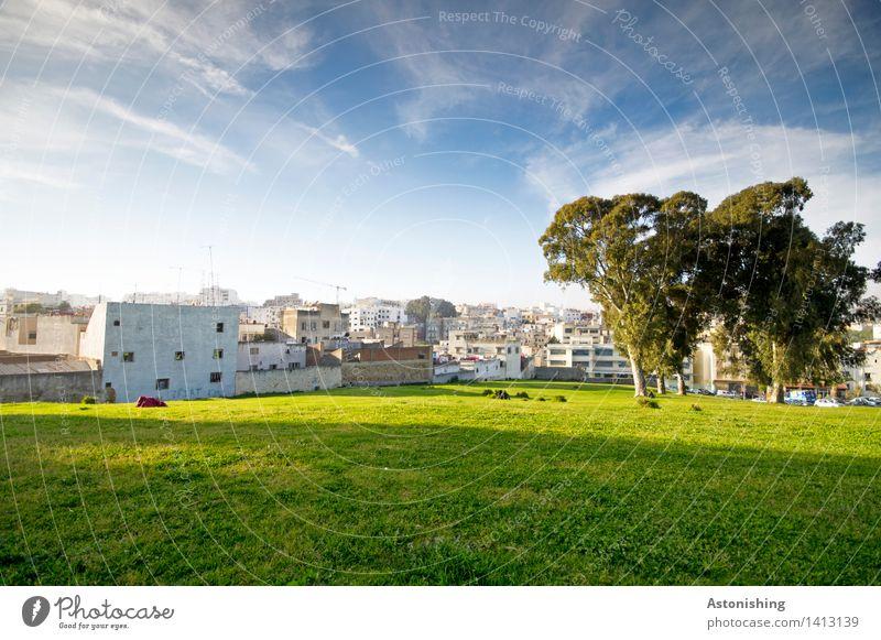die Bäume bewachen die Stadt Umwelt Natur Pflanze Luft Himmel Wolken Horizont Sonne Sommer Wetter Schönes Wetter Baum Park Wiese Tanger Marokko Altstadt Haus