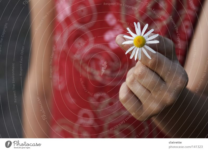 Da! Für dich! Hand weiß Blume rot Freude ruhig gelb Lebensfreude Duft Gänseblümchen Frühlingsgefühle Kamille Heilpflanzen Kinderhand Unkraut