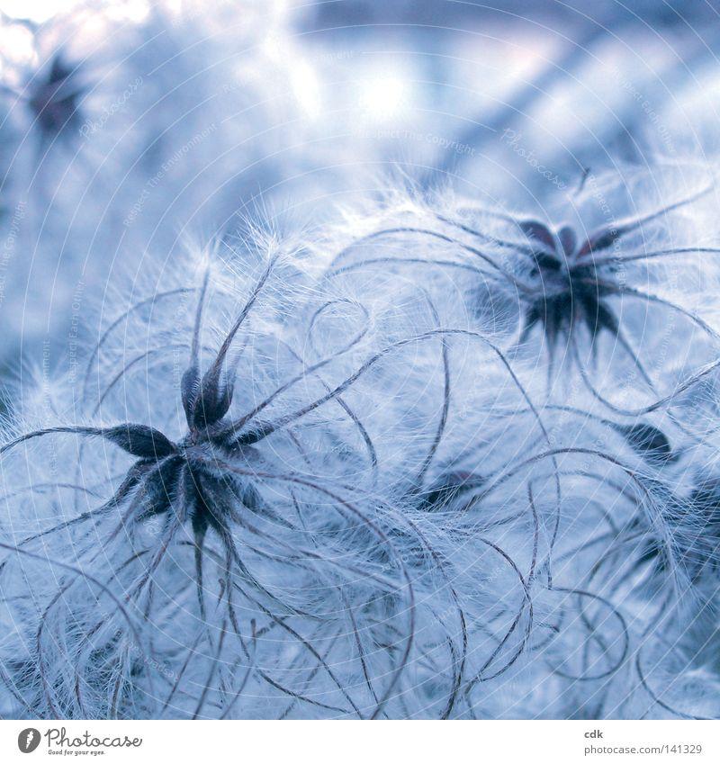 Sommerfrische Natur blau weiß schön Pflanze Winter Farbe Herbst kalt Spielen Gefühle klein Stimmung Linie 2 Zeit