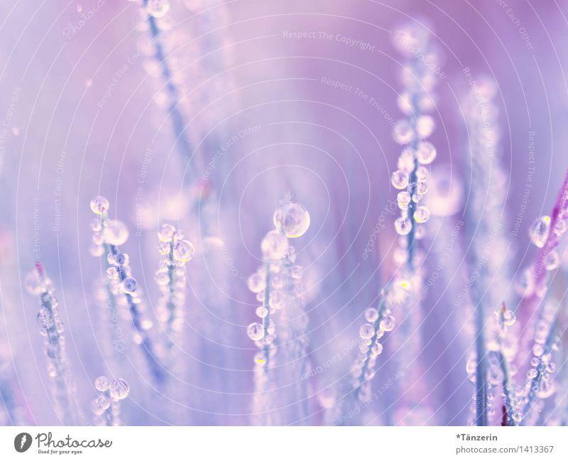 Tautropfen Natur Pflanze blau schön ruhig Umwelt Herbst Wiese Gras natürlich Garten rosa Park frisch Fröhlichkeit ästhetisch