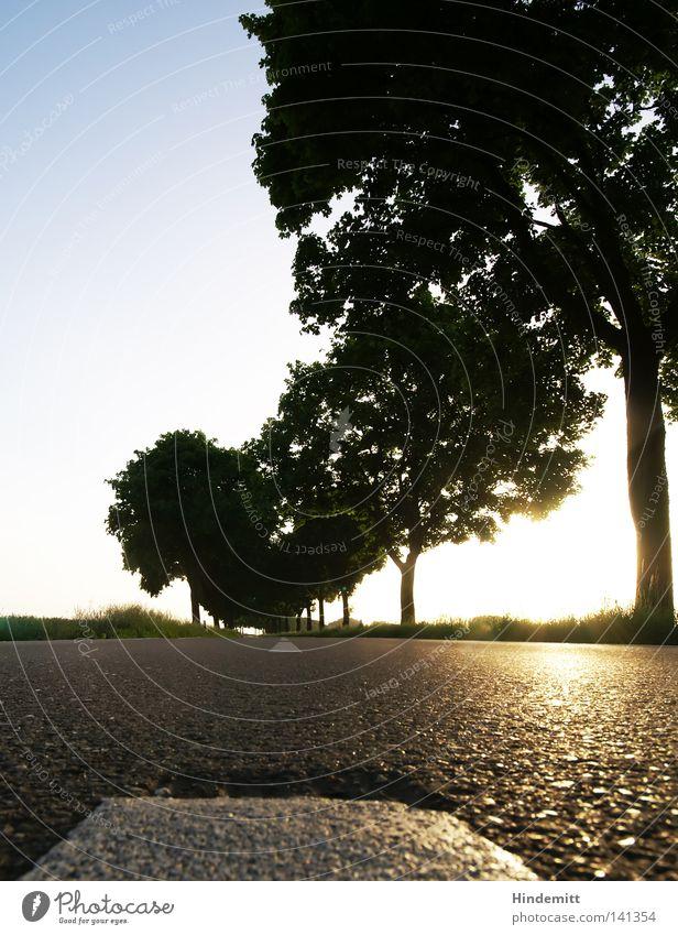 Asphalt Kiss Straße Perspektive Baum Sonne Gegenlicht Reflexion & Spiegelung glänzend Stein Teer fahren Fahrbahn Wege & Pfade Mittelstreifen