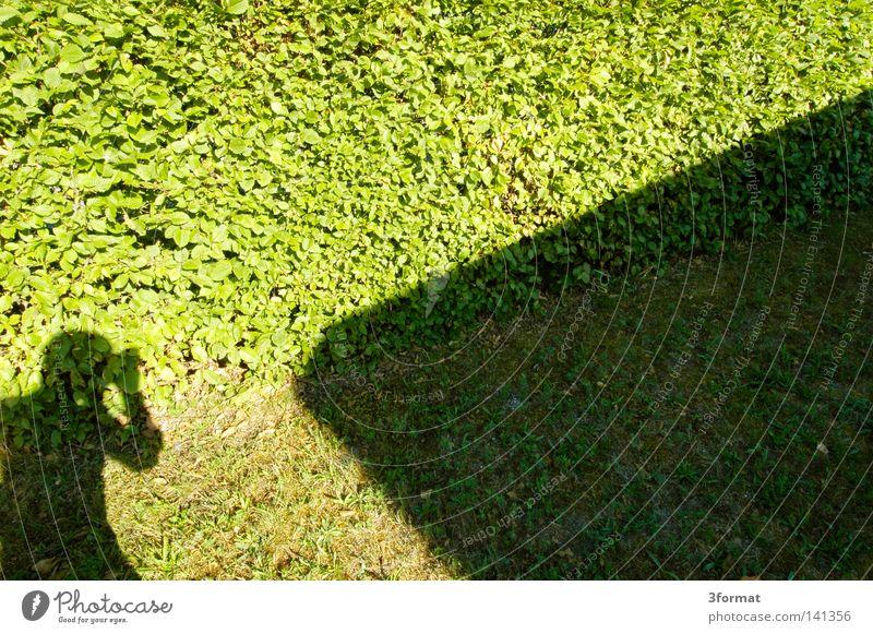 klotzen, nicht glotzen Mensch Mann Sonne Sommer Blatt Wand Gras Garten Mauer Linie hell Erfolg Rasen Zeichen Konzentration Grenze