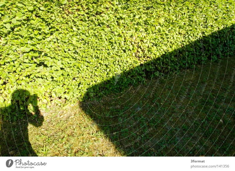 klotzen, nicht glotzen Schattenspiel Licht Sonnenlicht hell Sommer Hecke Blatt Wand Mauer Grenze Gras Mann Fotograf Fotografieren positiv gerade aufstrebend