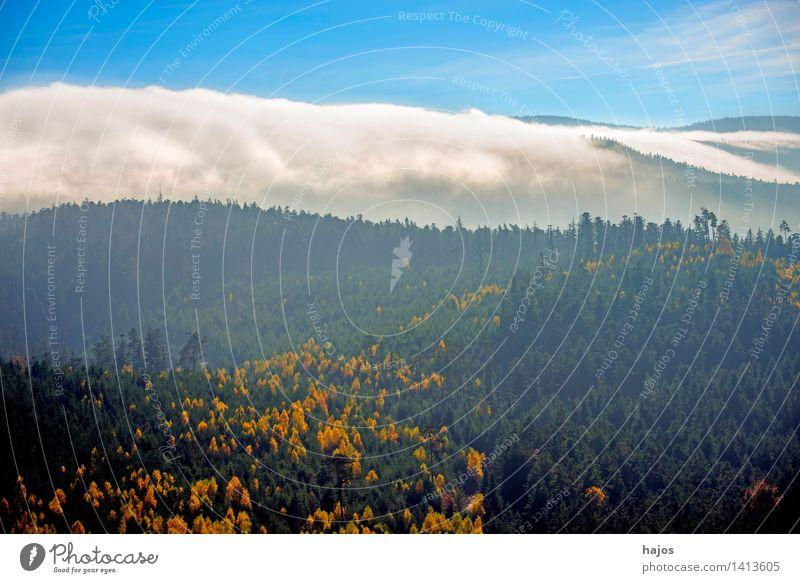 Blick auf die herbstlich verfärbten Wälder der Vogesen Tourismus Ferne Berge u. Gebirge Natur Himmel Herbst Nebel Baum Blatt Wald Hügel blau gelb Rocher de Dabo