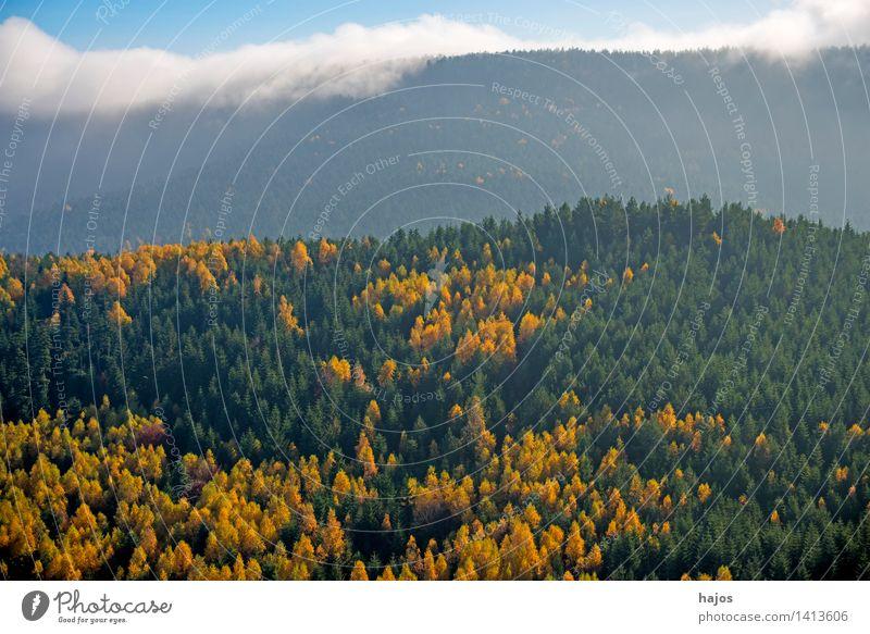 Blick auf die herbstlich verfärbten Wälder der Vogesen Tourismus Ferne Berge u. Gebirge Natur Himmel Herbst Nebel Baum Blatt Wald Hügel schön blau braun