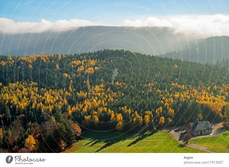 Blick herbstlich verfärbten Wälder der Vogesen Tourismus Ferne Berge u. Gebirge Natur Herbst Nebel Baum Blatt Wald Hügel blau gelb Rocher de Dabo Frankreich