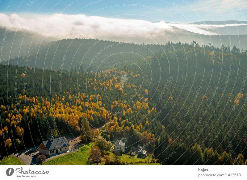 Blick auf die herbstlich verfärbten Wälder der Vogesen Tourismus Ferne Berge u. Gebirge Natur Himmel Herbst Nebel Blatt Wald Hügel blau braun mehrfarbig gelb