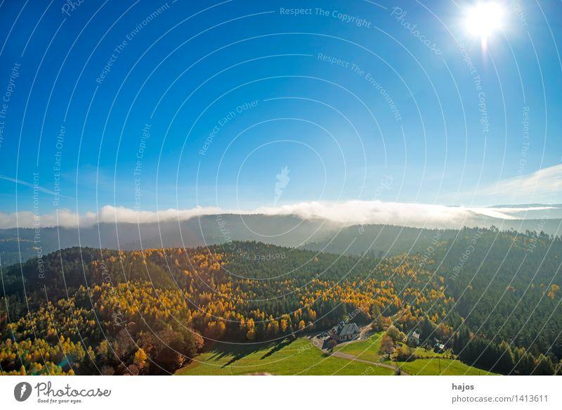 Blick auf die herbstlich verfärbten Wälder der Vogesen Tourismus Ferne Berge u. Gebirge Natur Himmel Herbst Nebel Baum Blatt Wald Hügel schön Wärme wild blau