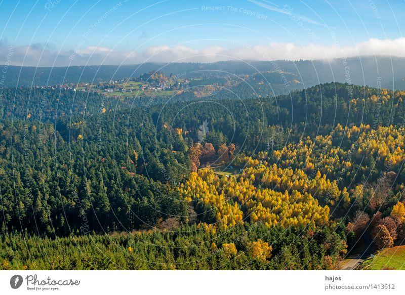 Blick auf die herbstlich verfärbten Wälder der Vogesen Tourismus Ferne Berge u. Gebirge Natur Wolken Herbst Nebel Baum Blatt Wald Hügel Gipfel blau braun