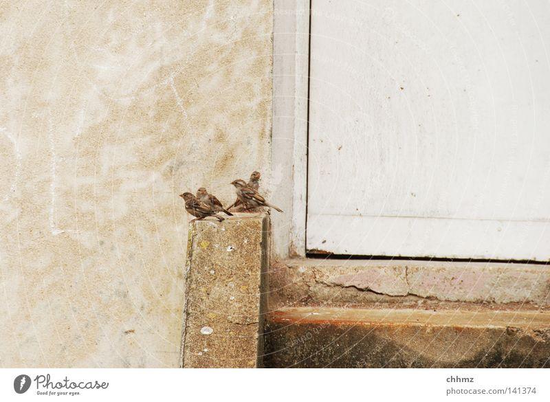 Spatzenplausch Erholung Leben Mauer lustig Vogel Tür sitzen Treppe warten mehrere Pause viele Neugier Herde Spatz Federvieh