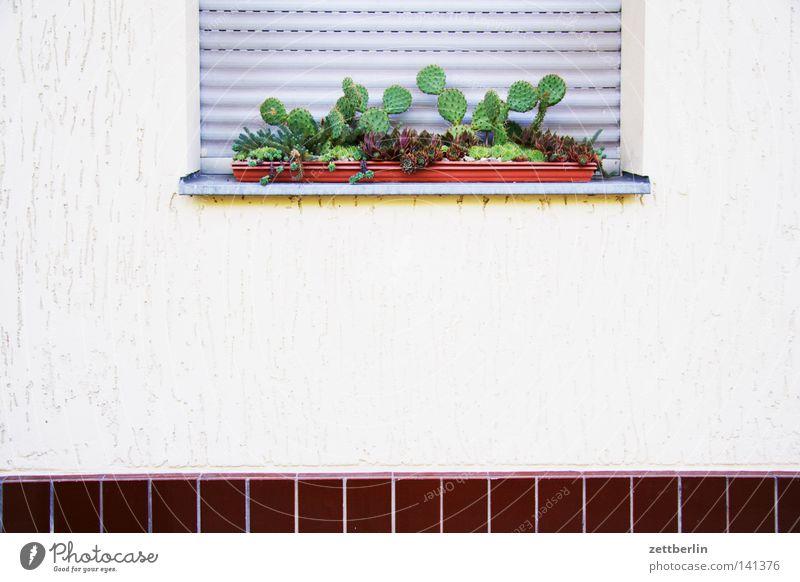 Kakteen Kaktus Pflanze Sauerstoff Blumenkasten Fenster Jalousie Rollladen geschlossen schließen Jungpflanze Physik Haus Mieter Vermieter Gebäude Detailaufnahme