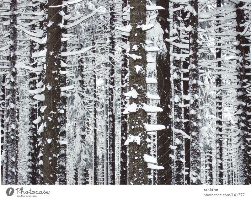schneebäume Baum kahl parallel braun Schnee Haufen hoch weiß geschlossen bedrohlich Außenaufnahme Winter kurze Äste Hauben