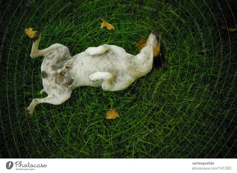 Freude Tier Gras Hund Park