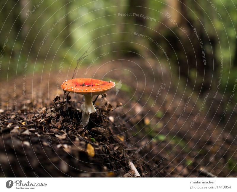 Mushroom Garden Natur Ferien & Urlaub & Reisen Pflanze grün schön rot Landschaft ruhig Wald Umwelt Leben Gras natürlich Garten braun Wachstum