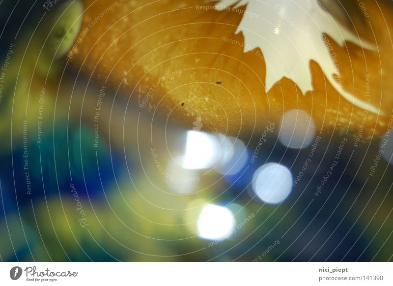 Pioniergehabe... grün blau Herbst Spielen Frühling Wärme braun Beleuchtung Glas Gold elegant gold rund Dekoration & Verzierung Punkt