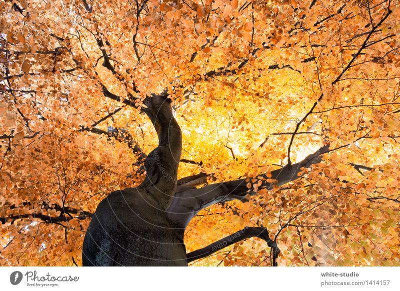 Absolute Autumn Natur Pflanze Baum Umwelt Leben Herbst träumen Wetter Orange Klima Lebensfreude Ast Vergänglichkeit Schönes Wetter Jahreszeiten Baumstamm