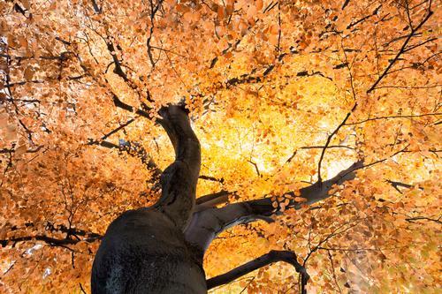 Absolute Autumn Umwelt Natur Pflanze Herbst Klima Wetter Schönes Wetter Baum träumen Leben Blattadern Abzweigung Straßenkreuzung verzweigt Baumstamm Ast Orange