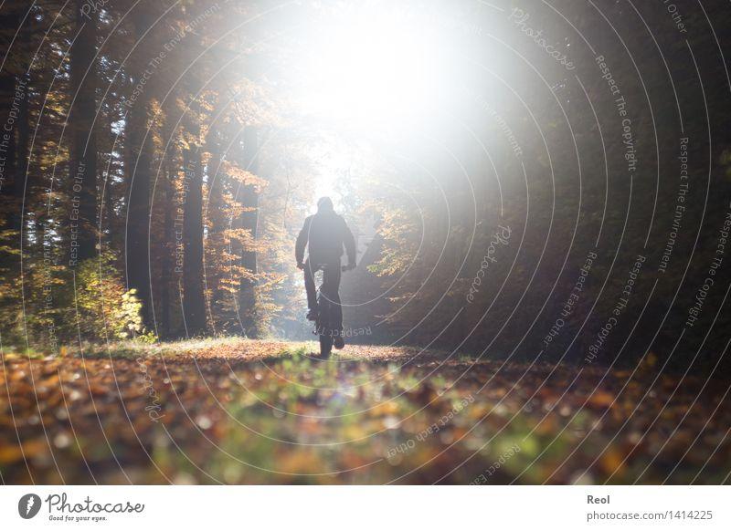 Goldener Herbst Mensch Natur Jugendliche Mann Sonne Erholung Junger Mann Landschaft Blatt Wald Erwachsene Wege & Pfade Sport braun hell