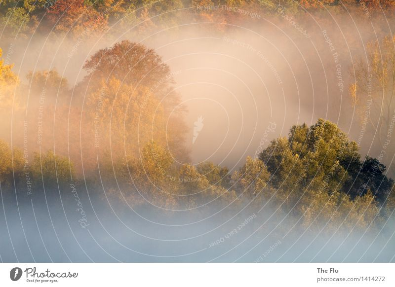 Morning has broken Umwelt Natur Landschaft Pflanze Herbst Schönes Wetter Nebel Baum Laubbaum Wald Hügel verblüht dehydrieren gelb gold grün Sehnsucht Stimmung