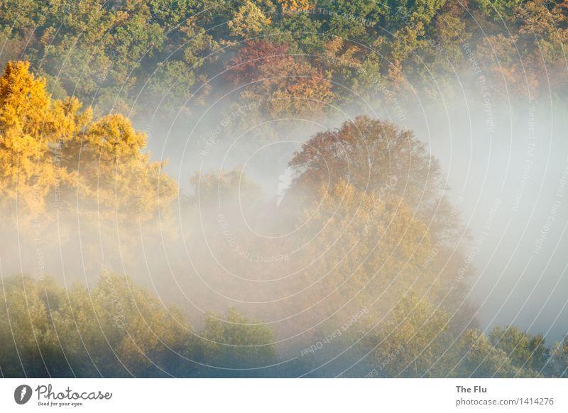 Umnebelt Umwelt Natur Landschaft Pflanze Sonnenaufgang Sonnenuntergang Sonnenlicht Herbst Wetter Schönes Wetter Nebel Baum Laubbaum Blatt Laubwald Wald Holz