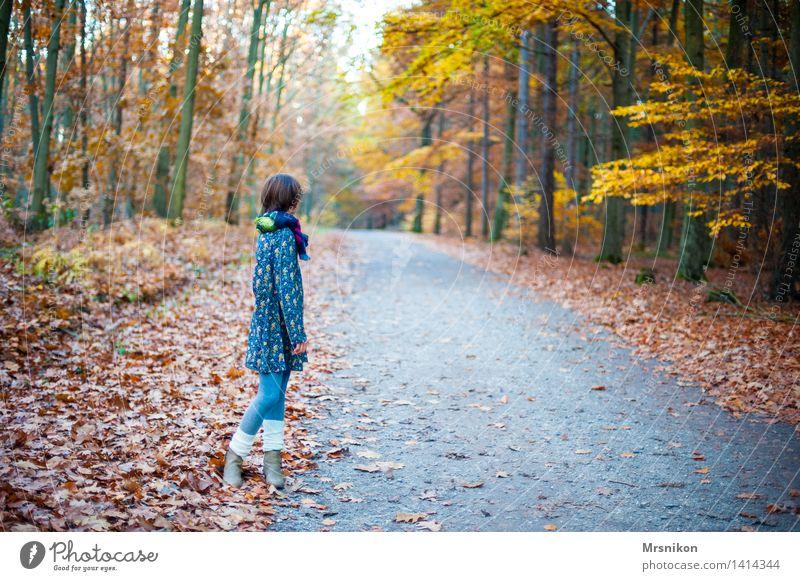 Warten feminin Kind Mädchen Kindheit Jugendliche 1 Mensch 8-13 Jahre kalt Herbst Herbstlaub Herbstwald herbstlich Herbstlandschaft wandern warten Blick ruhig