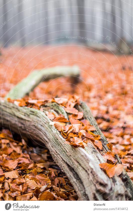 bedeckt Herbst Nebel Baum Wald Küste Ostsee braun mehrfarbig grau Gespensterwald Mecklenburg-Vorpommern Nienhagen Farbfoto Außenaufnahme Menschenleer
