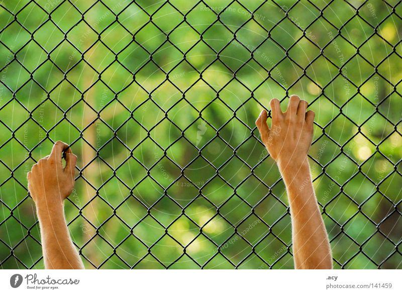 maschendrahtzaun grün Hand Freiheit Angst Haut Europa Zaun Ende Grenze Gesetze und Verordnungen Ausgrenzung gefangen Draht Versuch anonym Panik