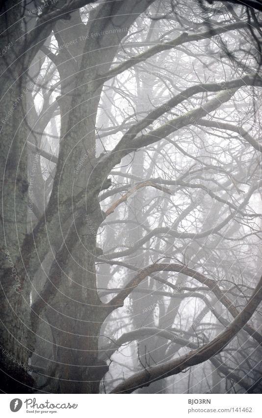 foggy woods #8 Natur Baum Winter Einsamkeit Wald dunkel kalt Traurigkeit Nebel nass Frost geheimnisvoll gefroren feucht vertikal